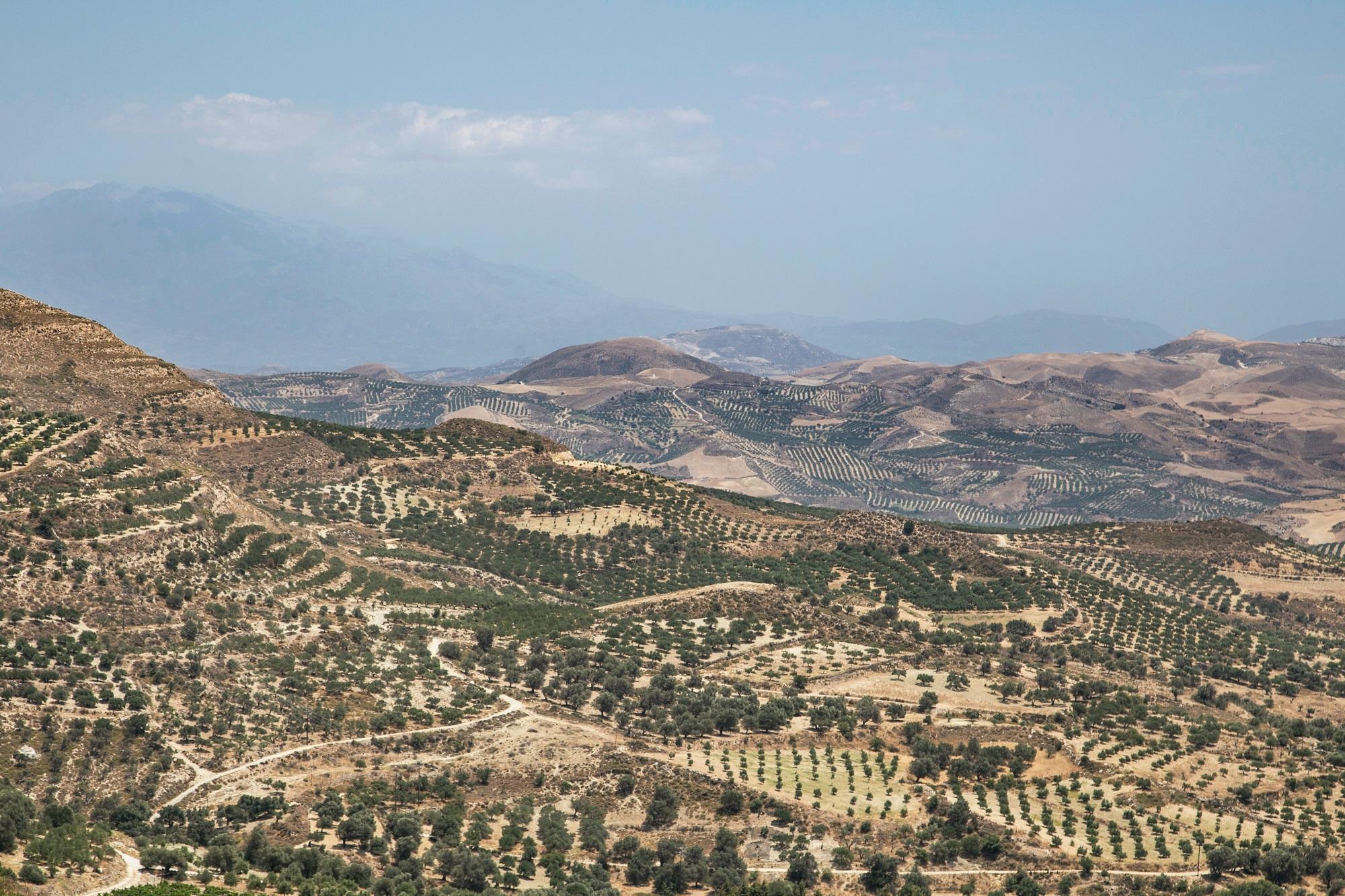 Türkiye'de Hangi Bölgelerde Zeytinyağı Üretiliyor?